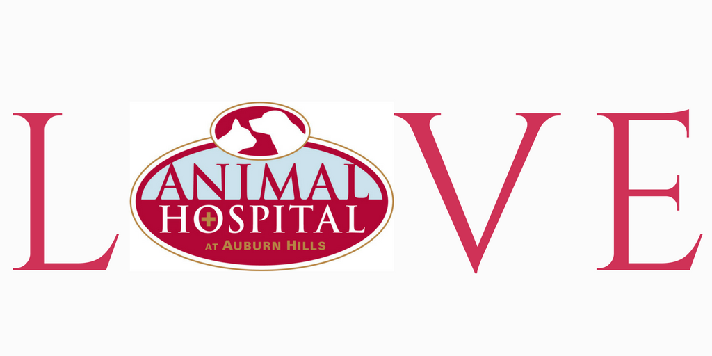 Animal Hospital at Auburn Hills we are here for you in Wichita, Kansas