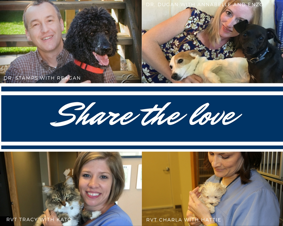 Dr. Gary Stamps and Dr. Sarah Dugan | veterinarians in west Wichita-Goddard, Kansas